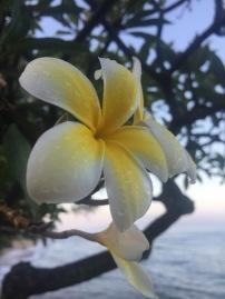 hawaii-37