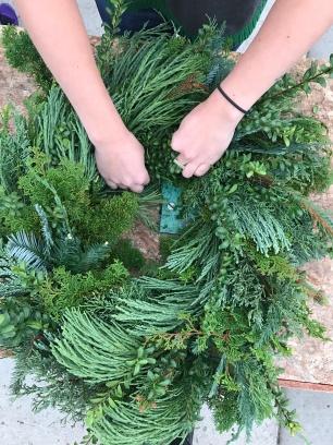 evergreen-14