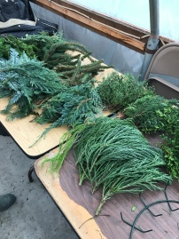 evergreen-5